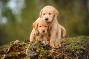Cute lovable puppy playing with his bro