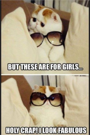 Cute Naughty Funny Cat! I laugh every time I see this