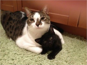 Cute Protective Mom Cat