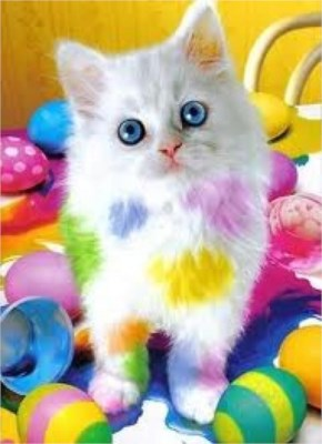 cute white kitten with blue eyes and rainbow colored