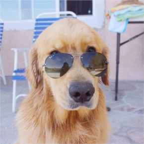 "Desmond the Golden Retriever says, ""Anyone want to reenact Top Gun with me"""