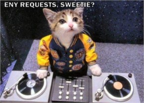 DJ Cat Funny Picture