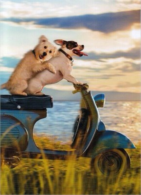 Dog Couple On Scooter Funny Romantic Card - Greeting Card