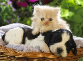 Dogs And Cats Living Together! Adorable