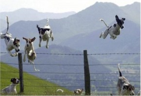 Dogs Leaping Over The Fence