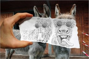 Donkey looks cool with drawing mask