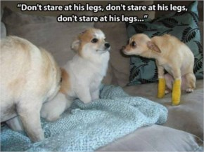 Don't stare at his legs...funny picture