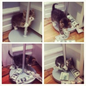 Dusty the Kitten Stripper Working the Strippers Pole to Help Pay Her Vet Bills.