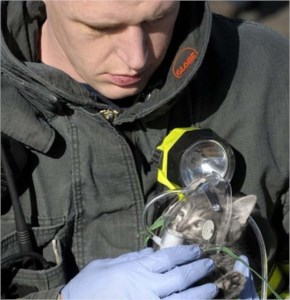 Firemen and Animal Rescues