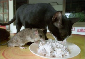 Friendship Has No Limits! cat shares a meal with mouse