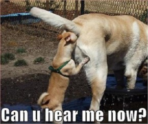 30+ Funniest Dog Collection