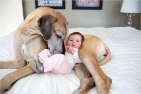 Funny Adorable Pictures Of Small Kids With Big Dogs