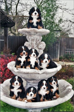 Funny Adorable Puppies