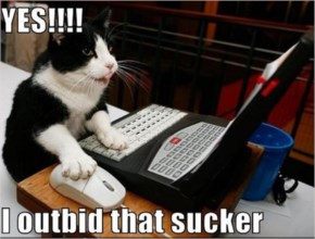 Funny And Cute Cat Using  With Modern Computers