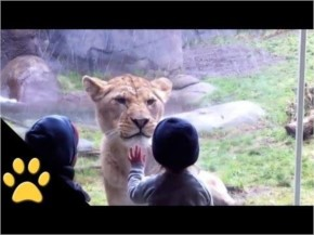 Funny and Cute Kids At The Zoo Playing with animals Compilation Video
