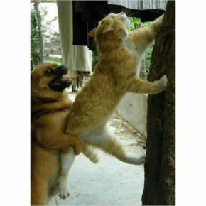 Funny Animal Team Work