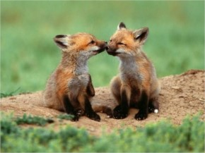laughspark caught 20 funny animals kissing Red-handed