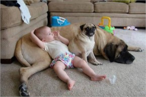 Funny Baby playing with dog and puppy