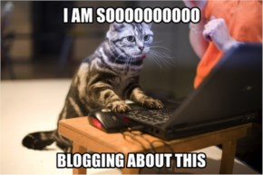 Funny Blogging Cat Meme