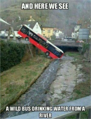 Funny bus drinking water from river