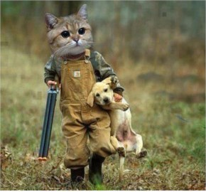 Funny Cat As A Hunter Carrying His Cute Dog