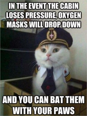 Funny Cat As Airplane Captain