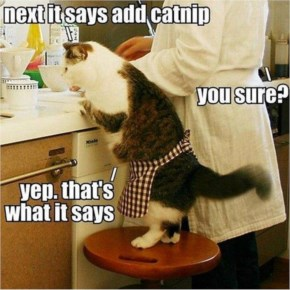 Funny Cat Cooking Picture On Memey