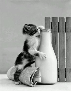 Funny Cat Drinking Directly