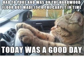 Funny cat driving carpet floor