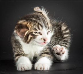 2015 Funny Cat Expression series ever seen