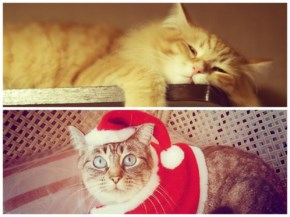 Funny Cat facts about how cat spends time