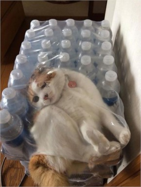 12 Funny Cat Fails Pics  which shows the helpless cats