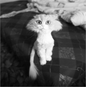 Funny Cat looks like Cartoon