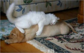 Funny cat make a great bed