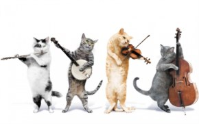 Funny Cat Music Band