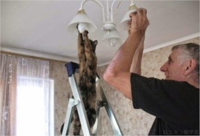 Funny Cat Thinks It's an Electrician