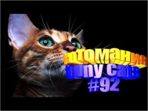 Funny cats | Fun with cats | Video about cats | Cotomania # 92