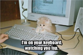 Funny Cats....I'm On Your Keyboard Watching You Fap