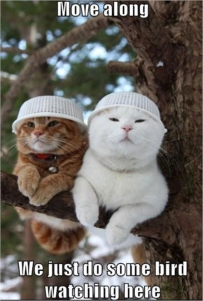 Funny Cats Pictures ... Two Funny Cats Sitting On The Tree Wearing Plastic Caps
