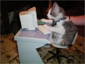 Funny Cats Sitting On Computers Keyboard Typing