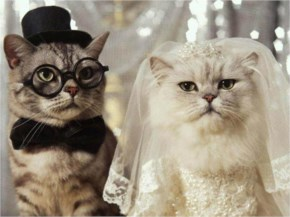 Funny Cats Wedding Images