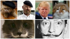 12 Funny Cats Who Look Like Famous Celebrities