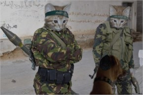 Funny Cats With Guns