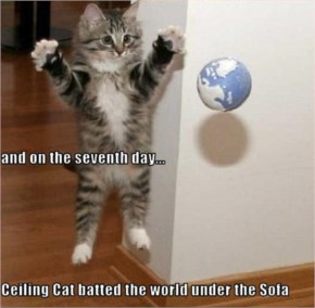 Funny ceiling Cat Pictures With Captions