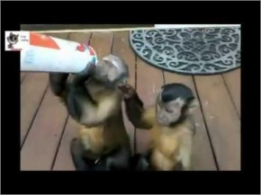 Funny Clever Cute Monkey Videos Compilation 2014