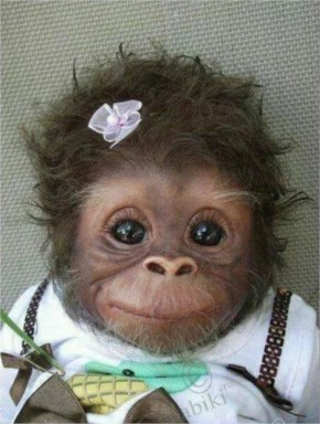 Funny Cute baby monkey