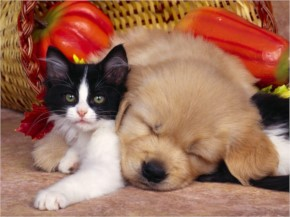 Funny Cute Cat And Puppy Playing Together