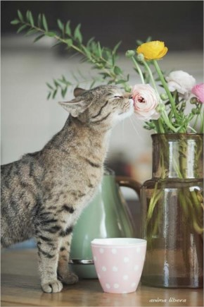 Funny  Cute Cat Smelling Flower