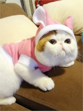 Funny Cute Cat Wear Sweater