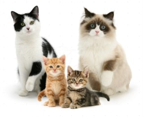 Funny Cute Cats  Family